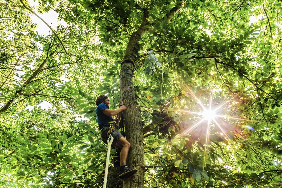 TREE-ENFER